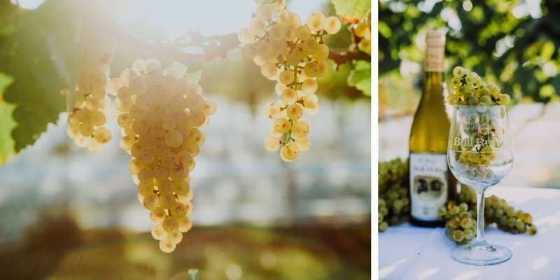 Rock Mill Vineyard Chardonnay