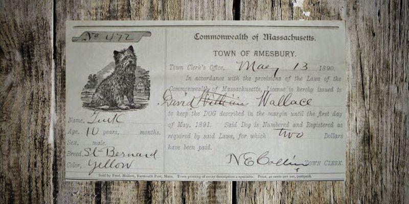 Paper dog license