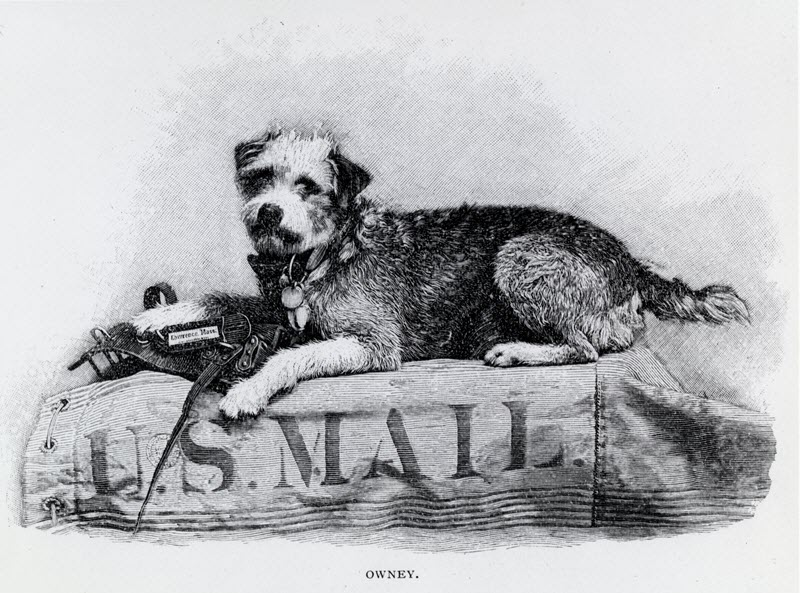Owney Mail Dog
