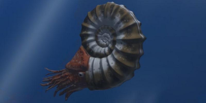 Ammonite Illustration